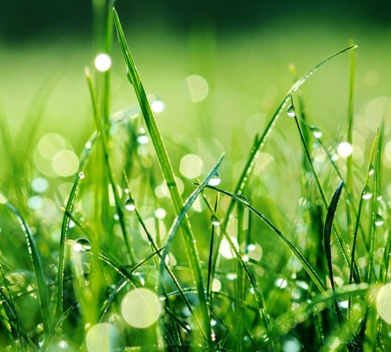 DIY irrigation systems can help you provide plenty of water for your thirsty grass.
