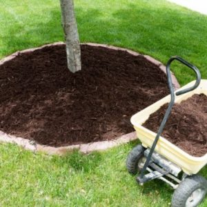 Adding mulch around your trees and shrubs is an excellent part of landscaping winterization here in Novi, MI.