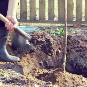 Spring tree planting here in Michigan puts your young tree in the best position to grow and thrive throughout the year.