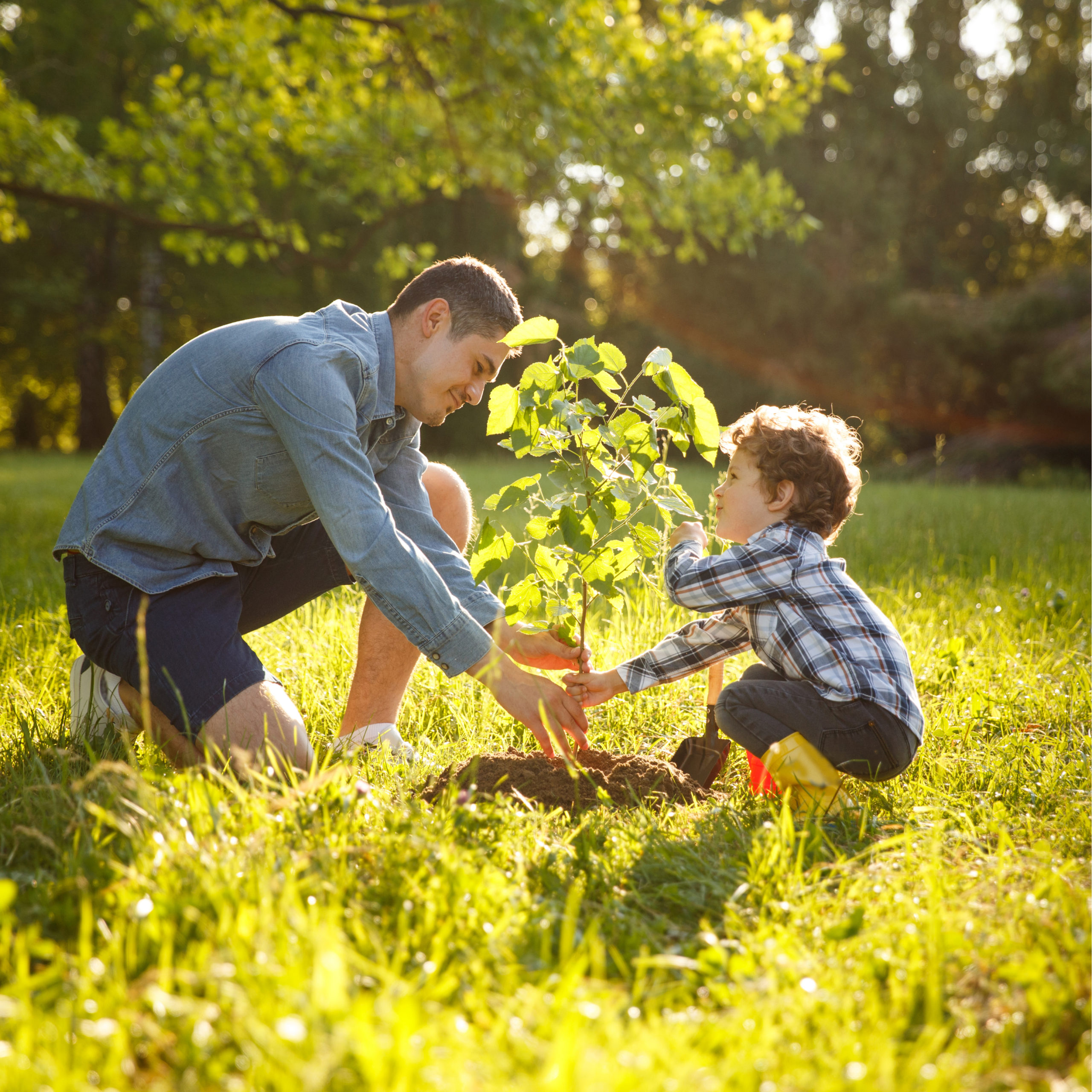 Here at Images Landscaping, in Novi, MI, we know the joy that spring tree planting can bring to you and your family.